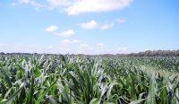 Det danske landbrug er et af de mest klimavenlige i verden, så det vil være en katastrofe for klimaet, hvis vi vælger at lukke ned for produktionen for at leve op til diverse klimakrav, mener områdedirektør i Landbrug & Fødevarer Niels Peter Nørring.