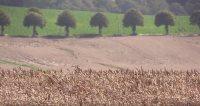 Landmænd i Danmark skal være færdig med at høste 20. august, ellers får de et stort kvælstoftræk.