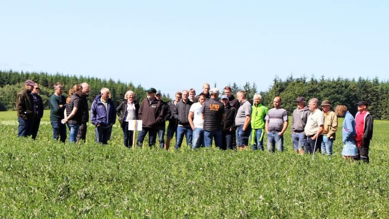 LMO og Økologirådgivning Danmark er gået sammen i et rådgivningssamarbejde, og vil fremadrettet blandt andet være sammen om arrangementer som Grovfoderdagen og Økotræf.