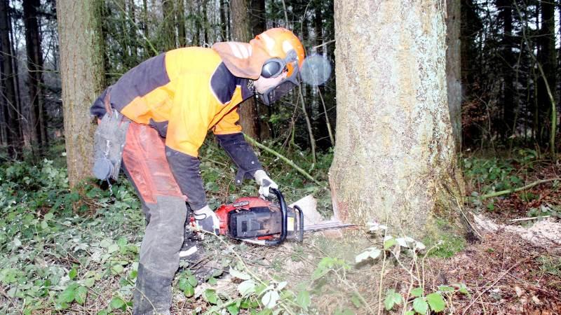Vi skal øge produktionen og forbruget af træ i Danmark og i resten af verden, lyder det fra forskere og skovfolk.