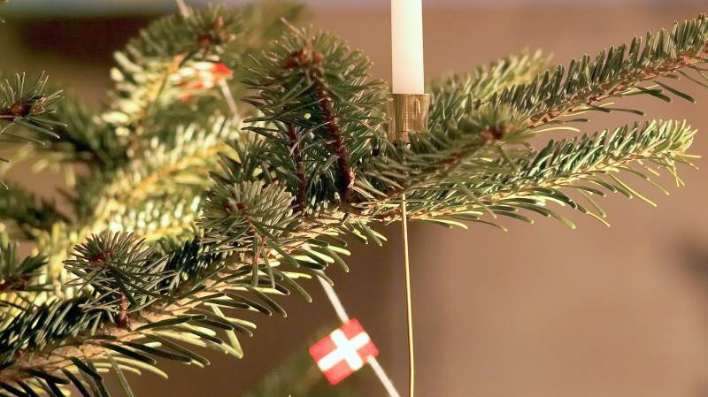 På bare én hektar med juletræer årligt bindes 12,2 tons CO2. – Så vælg et ægte træ, opfordrer man fra Danske Juletræer.