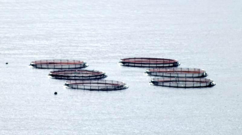 Siden 2018 er der stillet krav om, at landbruget udlægger efterafgrøder som kompensation for en pulje på 43 tons kvælstof, som havbrug har kunne søge om at udnytte.