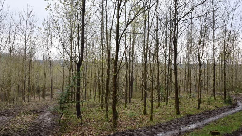 Jeg har nok plantet 40.000 træer i min levetid samt dyrket arealer, der dagligt optager masser af CO2 – planteavl gavner nemlig i dén grad klimaregnskabet. Hvor mange har gjort en tilsvarende indsats, spørger skribenten. Arkivfoto: Anders Kurt Simonsen