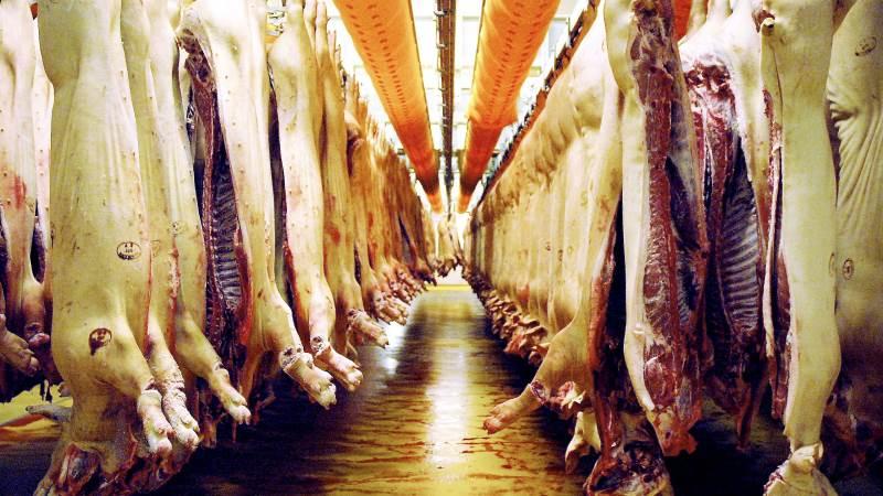 Prognosen for svineprisen for 1. halvår af 2020 er blevet opjusteret med over en krone af Seges.