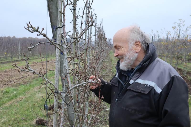 Glæden er ikke til at tage fejl af hos den økologiske frugtavler Anders Lindgård, når han spotter nye skud på hans mange tusinde frugttræer i plantagen Kysøko ved Næstved. Det gælder dog ikke for den plantage, han fik EU-støtte til, hvor rækkerne er plantet for tæt.
