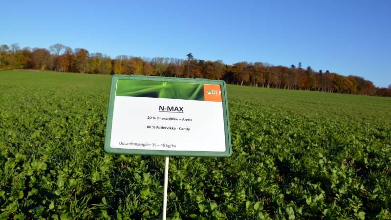 Hvis det kommende pilotprojekt med mål for biomasse på markerne bliver en succes, kan der i fremtiden være færre marker med efterafgrøder som på billedet her.
