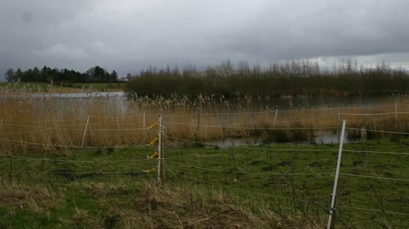 EU har bidraget til vådområdet med landdistriktsmidler, som blandt andet er gået til indhegning, foderhuse, informationsskilte og fugleøer.