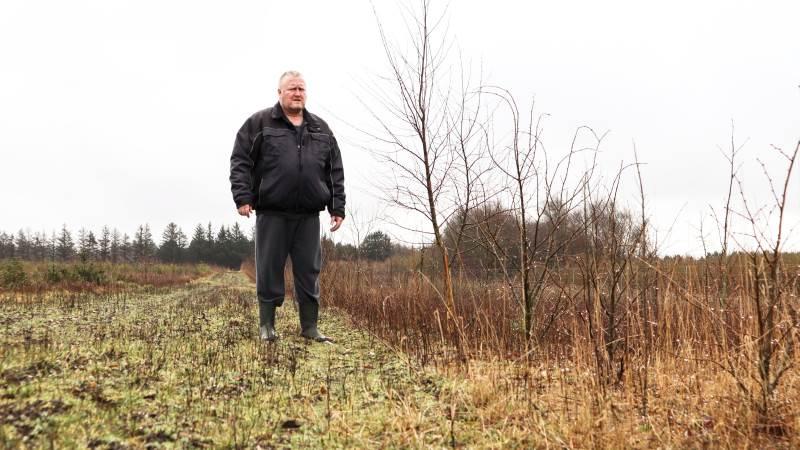 - Jeg har tænkt med min skov, at den gerne må være flot at se på, men der må også gerne være noget for dyrene at leve af og for mig at plukke af, siger Allan Jansen