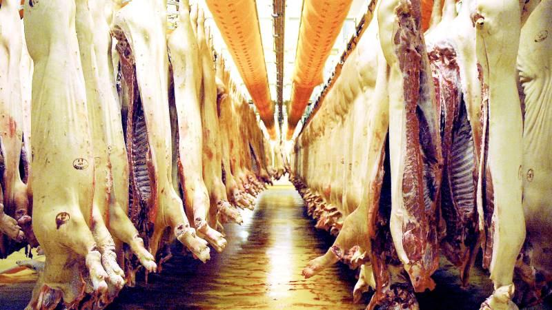 Der bliver også fyldt op med slagtesvin hos Tican i Brørup i påsken. Slagteriet holder ekstraordinært åbent. Arkivfoto