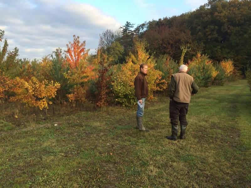 En blot tre år gammel lystskov, som allerede giver stor værdi og megen glæde.