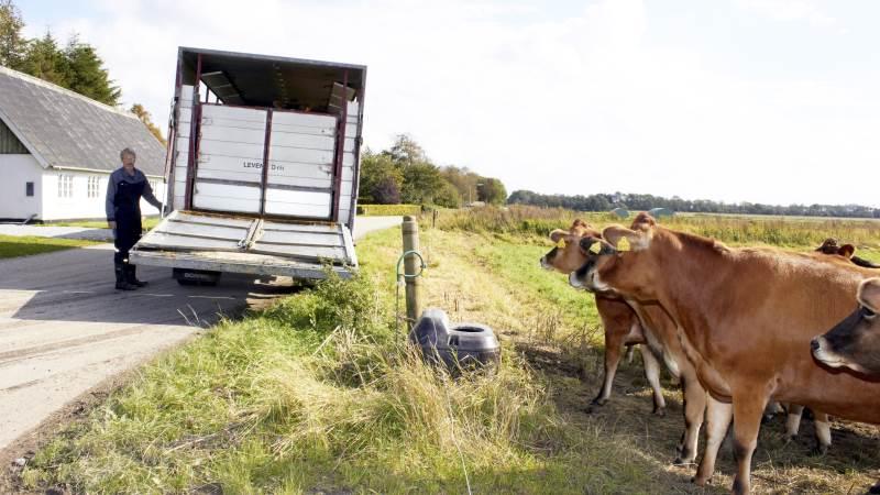 Alle dyrearter er omfattet af den nye aftale om kontrol af dyretransporter.