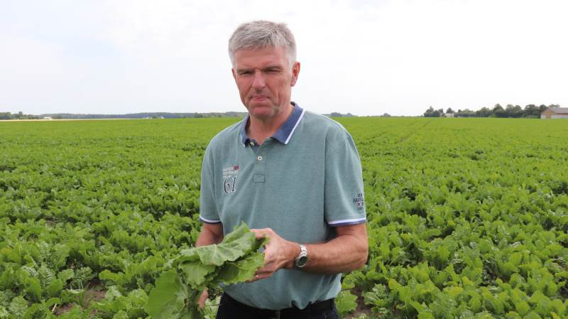 Troels Frandsen, Vatoregaard ved Nysted på Sydlolland, driver 440 hektar - heraf 130 hektar i år med sukkerroer. Han er ny formand for Danske Sukkerroedyrkere. Foto: Jørgen P. Jensen.