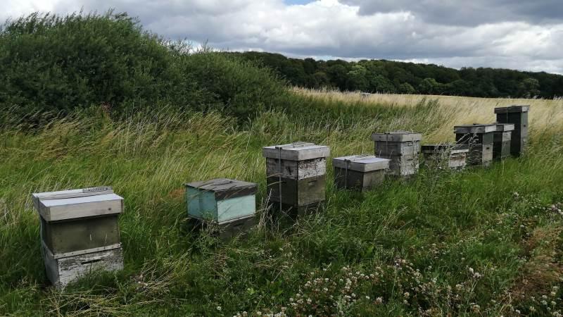 Dan Rasmussen fra Tangmosegaard mener, man aldrig bør gå ned på bier. For hvidkløverdyrkning er bestøvningen nemlig alfa og omega, og derfor har han opsat minimum to stader pr. hektar. Fotos: Majbritt Christensen