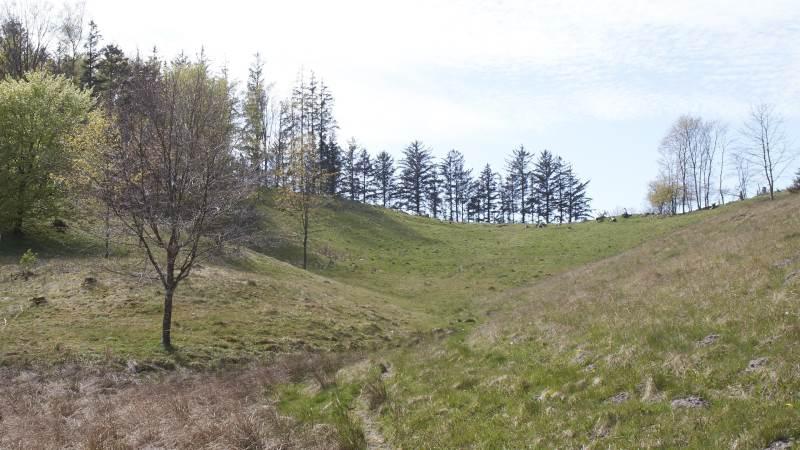 Hvis man har særlige Natura 2000-arealer på sin ejendom, kan man fra den 7. august søge om tilskud til hegning og/eller rydning.