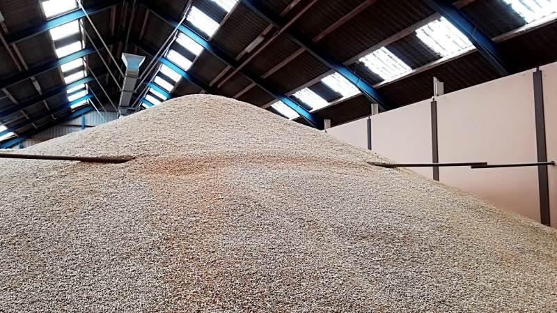 Der er høstet korn i flotte kvaliteter i Nordjylland. Foto: Camilla Bønløkke