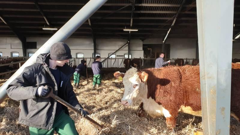Op mod 100 unge mennesker får mulighed for at lege landmænd i en dag eller to i efterårsferien i Nordjylland.