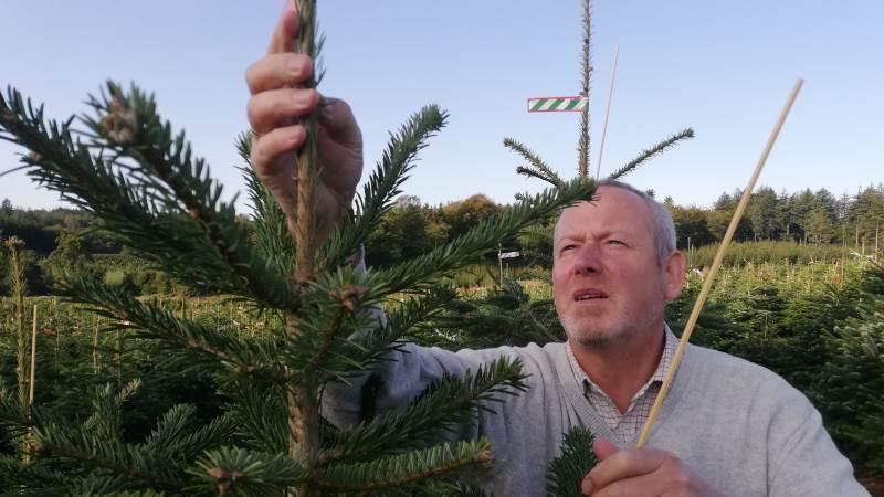 Ifølge Christian Bruun taber han i øjeblikket penge per juletræ han producerer, fordi salgspriserne er lave.