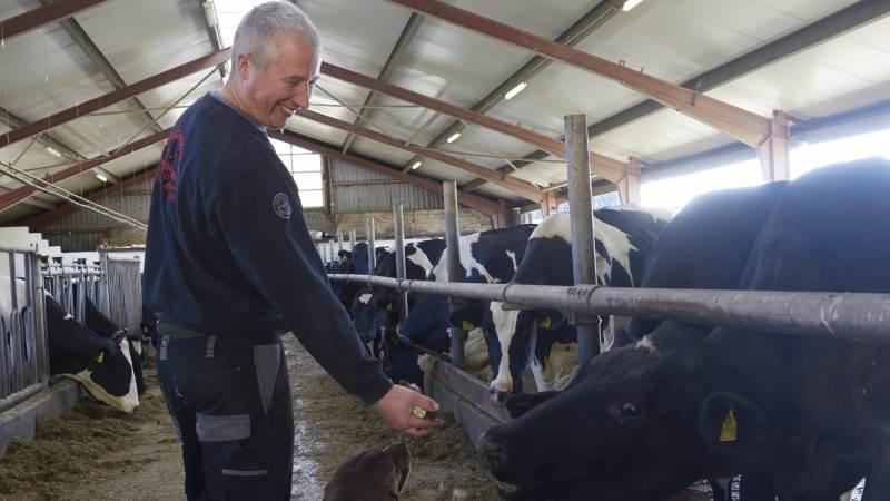 På Mosegaarden laver Preben Drejer Pedersen selv foderplanen til sine godt 100 køer. Og den indeholder, som en selvfølge for ham, roer. Fotos: Tenna Bang