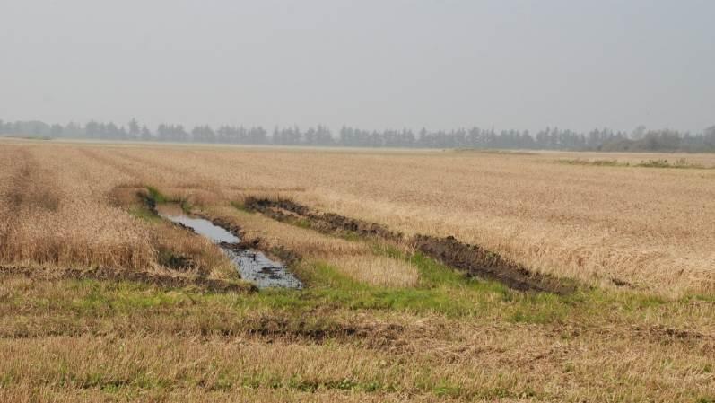 Dette areal i Lille vildmose er et eksempel på et lavbundsmark med våde jorde.