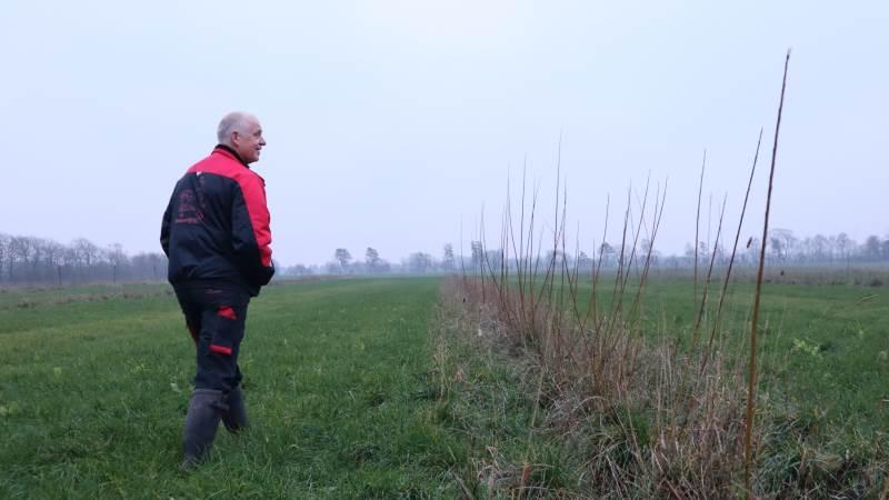 De nye rækker af træer er hegnet ind øjeblikket for foreløbigt at beskytte mod rådyr.