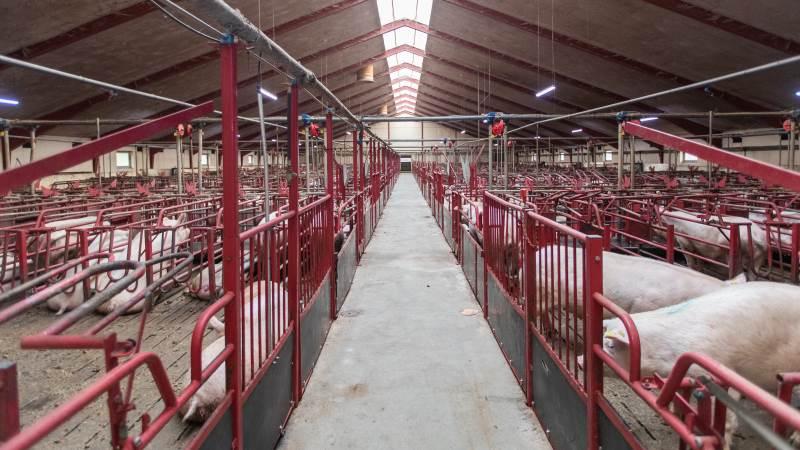 Pengeinstituttet for en sønderjysk svineproducent har fået stillet garanti for et beløb, der skal dække omsætningstab som resultat af Covid-19.