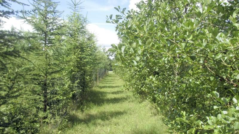 Rekordmange lodsejere vil plante ny skov i Danmark. Arkivfoto