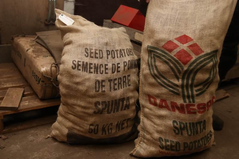 Familien Skov Jensens læggekartofler eksporteres via Danespo til Nordafrika, Syd- og Mellemeuropa.