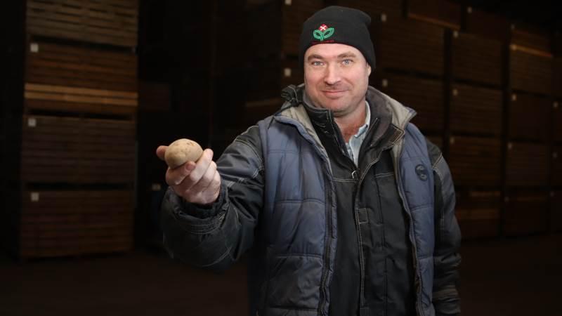 Lægge-kartofler til eksport er en risikofyldt produktion, der er følsom overfor vind, vejr og plantesygdomme. Solceller er derfor et godt, sikkert økonomisk supplement til bedriften.