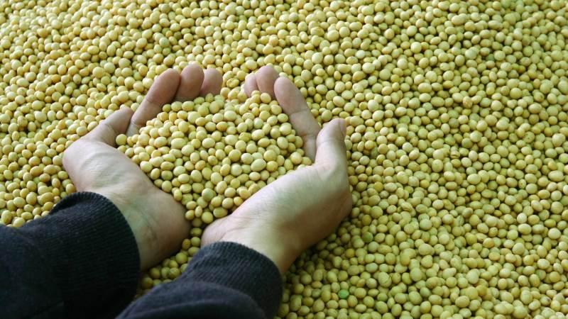 Det strammer til derude, og det er forklaringen på, at prisen for sojabønner og oliefrø fastholder de prisstærke takter, skriver markedsanalytikeren Peter Arendt i sin analyse. Foto: Colourbox