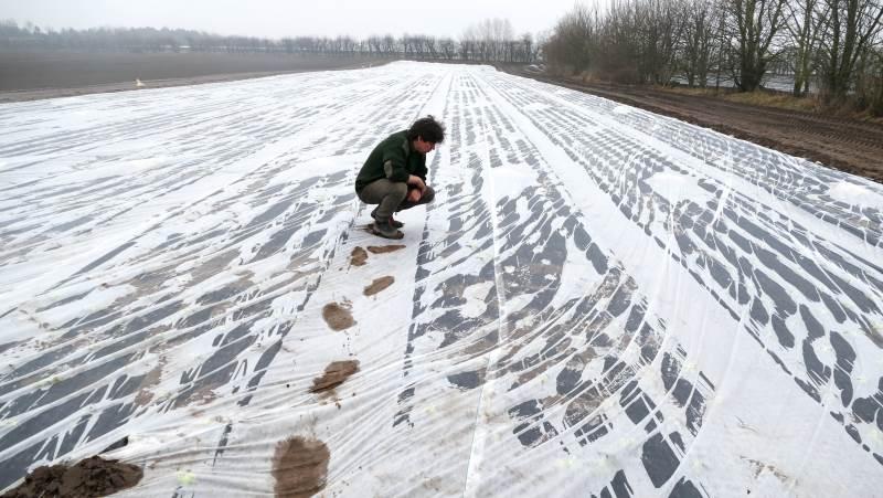 I 2020 dyrkede danske landmænd næsten 25 procent flere kålmarker, end de gjorde for bare fem år siden. Særligt blomkål og spidskål er blevet populære herhjemme. Arkivfoto