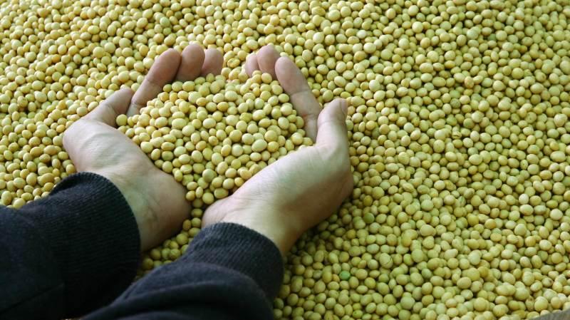 Der er flere forklaringer på, at Kina nu igen køber enorme mængder af blandt andet majs og sojabønner fra USA, skriver markedsanalytikeren Peter Arendt i sin analyse.
