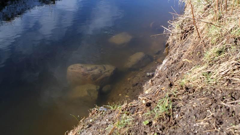 Her er nogle af de sten, som er blevet smidt tilbage i Tysinge Å efter en oprensning i oktober sidste år. Stenene øger vandstanden, lyder det fra landmænd i Holbæk Ålav. Fotos: Lasse Ege Pedersen