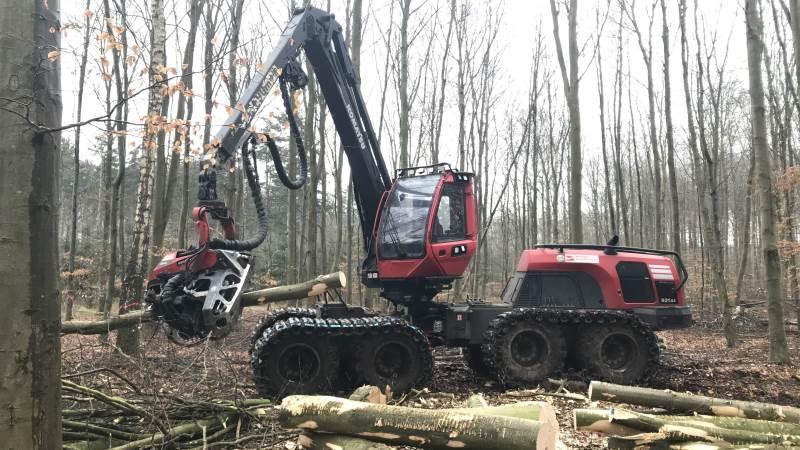 Svanninge Skovservice bruger pt. en stor del af arbejdsugen med udtynding af løvtræer.