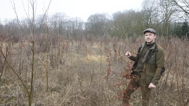 Behandlingen af ansøgninger kan godt tage nogle måneder, ikke mindst i disse coronatider. – Fristen for næste års tilskudspulje til skovrejsning er til september, så derfor er det høje tid at få sat gang i processen, påpeger skovfoged Stefan Petersen, der her ses i en ny skov fra 2019.