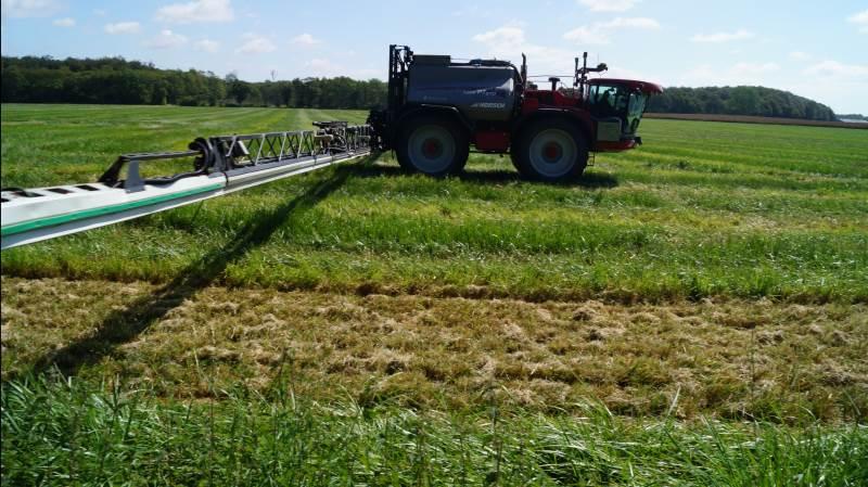 Balaya har i forsøg vist gode resultater ved svampebekæmpelse i frøgræs, oplyser BASF. Arkivfoto