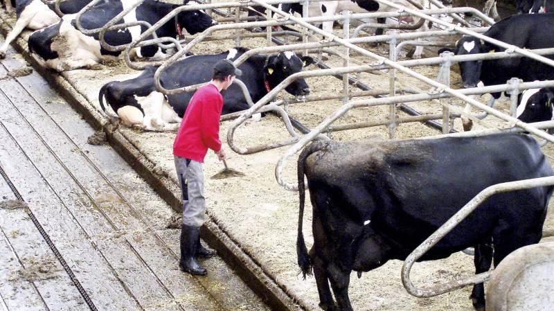 Prisen på mælk ligger fortsat over Danmarks Statistiks 2015-basisår, mens prisen på kvæg ligger under. Arkivfoto