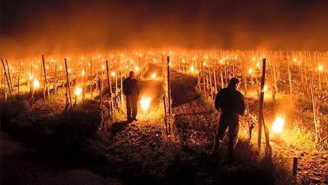 Teknikken, de franske vinproducenter bruger, er en anerkendt metode i branchen. Her ses samme procedure i Østrig i 2016. Foto: Meteo Forum
