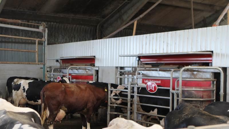 Lely tilbyder nu Commodity-foderautomaten som standardudstyr til deres malkerobotter. Systemet gør, at man blandt andet kan fodre med løse fodermidler i malkerobotten. Arkivfoto: Christian Carus