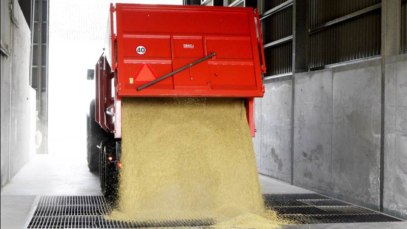 Ifølge nye tal fra det amerikanske landbrugsministerium overgår eksporten af hvede ud af USA nu langt det forventede, skriver markedsanalytiker Peter Arendt, MinAgro. Arkivfoto