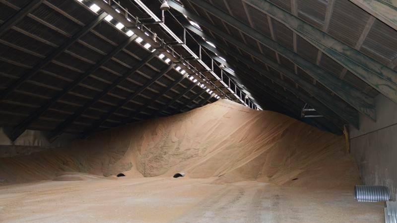 I den seneste Wasde-rapport meldes der om produktionsnedgang af især hvede og majs. Arkivfoto: Camilla Bønløkke