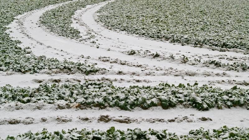 De usædvanlige frostgrader har været en udfordring for en lang række franske landmænd, der står til at miste enormt udbytte. Foto: Pxhere