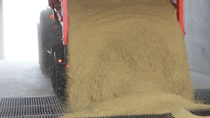 De største besparelser i DLGs nye høstbetingelser ligger i en halvering af tørringstaksterne ved foderkorn, der leveres med mellem 15 og 17 procent vand. Desuden fjernes betaling helt for rensning af foderkorn med op til en procent urenheder. Arkivfoto