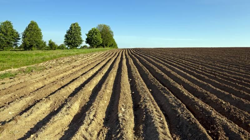 For at få succes som kartoffelavler kræver det, at man kan sit håndværk og altid er omhyggelig med sin landbrugsmæssige faglighed. Foto: Velas