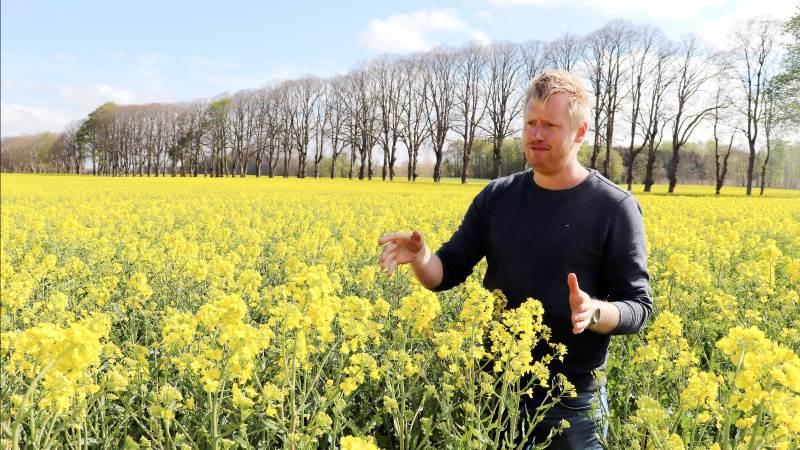 Til svampesprøjtningen i raps anbefaler Søren Lykkegaard Hansen, Bayer, at køre med 200 l/ha vand og sørge for at komme godt ned i afgrøderne, så svampemidlet ikke kun afsættes i toppen på kronbladene.  Arkivfoto: Jørgen P. Jensen