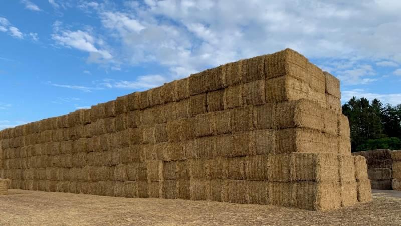 Mange arbejdsulykker i landbruget sker på grund af forkert håndtering og stabling af halmballer. Blandt andet er det vigtigt, at ballerne stables i forbandt. Arkivfoto: Jesper Hallgren