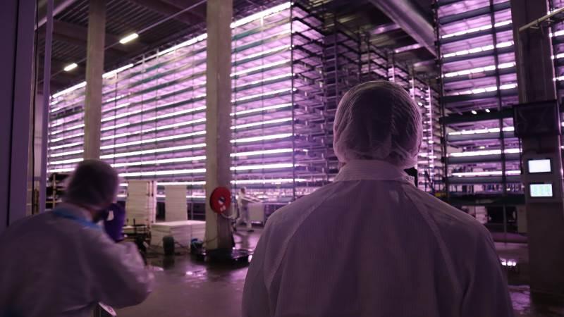 I hver række er der 14 etager med vandbade, som planterne bliver dyrket i.
