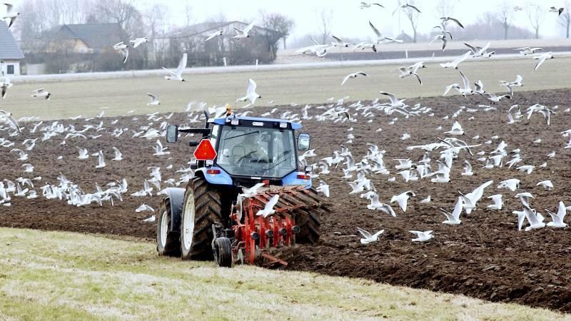 De mest almindelige selskabsformer indenfor landbruget er de personligt ejede virksomheder, anpartsselskaber eller aktieselskaber.