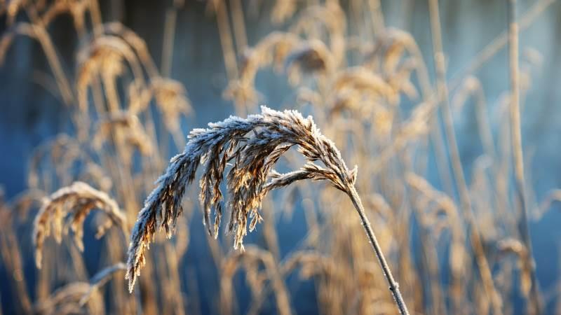 De hårde frostgrader i Frankrig har nu fået regeringen til at allokere en milliard euro for at hjælpe de enorme frostrelaterede tab hos de franske landmænd. Foto: Pixabay