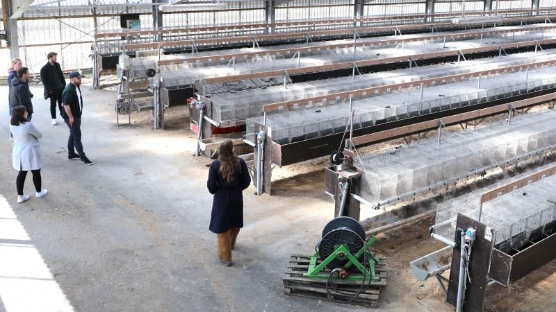 De studerende var ude og foretage feltarbejde for at indsamle brugbar data hos tidligere minkavler Anita Kaag. Foto: Aarhus Universitet: Aarhus BSS