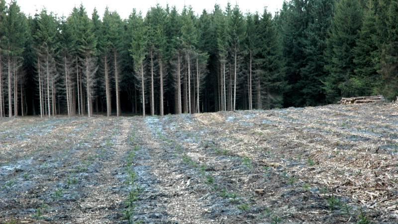 I skovene snuser granbarkbiller sig frem til de bedste træer og de lækreste partnere ved hjælp af lugtreceptorer i deres antenner. Ny viden herom kan føre til udvikling af bedre og mere miljøvenlig bekæmpelse af granbarkbiller, der anretter store skader på nåletræer.